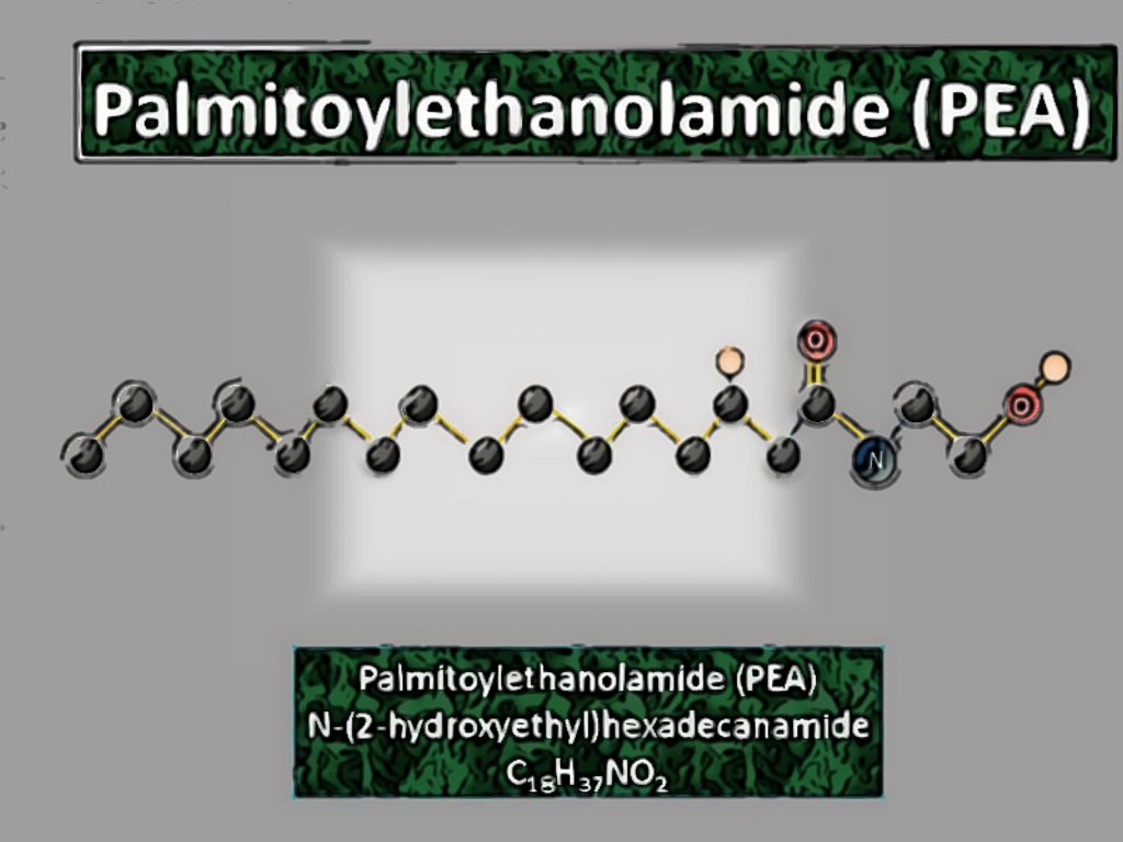 Palmitoylethanolamide: History and Researches