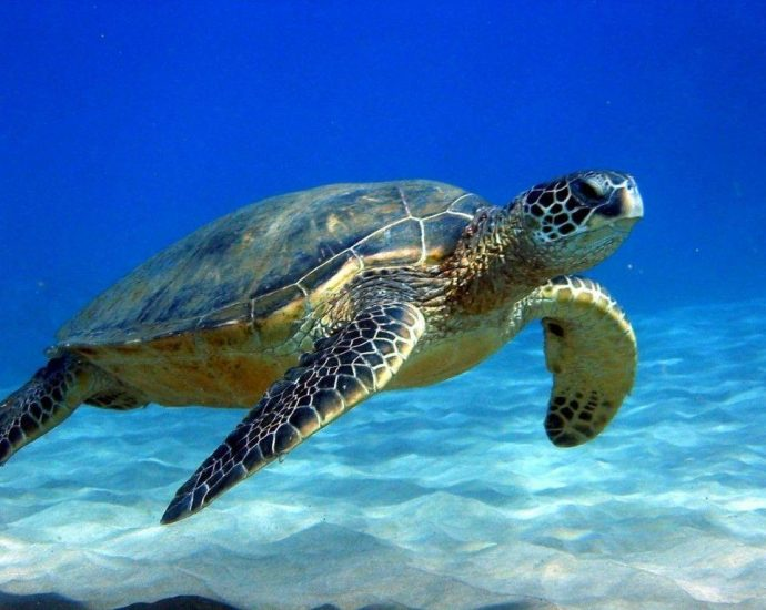 Ideal+ Turtles+ For+ Family Pets Search Phrase Found Internet Site Listing